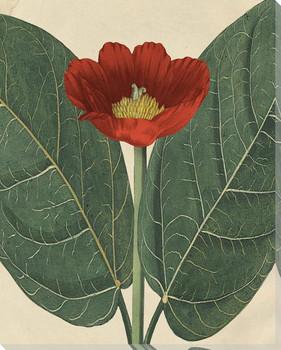 Peony Botanical Beauty Wrapped Canvas Giclee Art Print Wall Art