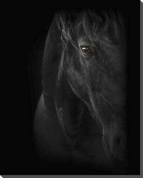Black Pearl Horse Wrapped Canvas Giclee Art Print Wall Art