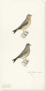 Bird Plate 96 Wrapped Canvas Giclee Print Wall Art