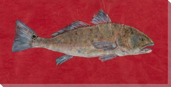 Super Red Redfish Wrapped Canvas Giclee Print Wall Art