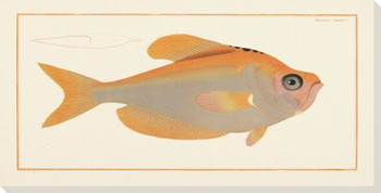 Kyrtus Indicus Fish Wrapped Canvas Giclee Print Wall Art
