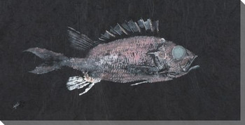 Glass Eye Squirrelfish Wrapped Canvas Giclee Print Wall Art