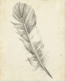 Feather Sketch I Wrapped Canvas Giclee Print Wall Art