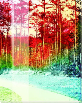 Fall's Splendor II Wrapped Canvas Giclee Print Wall Art