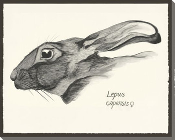 Bunny Profile Wrapped Canvas Giclee Print Wall Art
