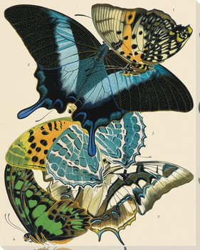 Exotic Butterfly VI Wrapped Canvas Giclee Print Wall Art