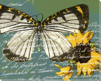 Scrolled Butterfly 1 Wrapped Canvas Giclee Print Wall Art