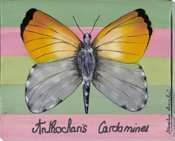 Anthocharis Cardamines Butterfly Wrapped Canvas Giclee Print