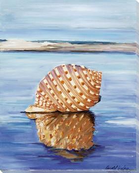 Beach Shell Wrapped Canvas Giclee Print Wall Art