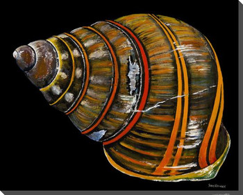 Cuban Land Snail Wrapped Canvas Giclee Print Wall Art