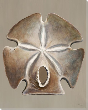 Sand Dollar Shaded Wrapped Canvas Giclee Print Wall Art