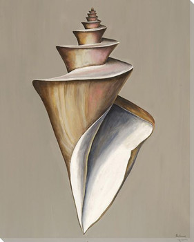 Spider Conch Shell Wrapped Canvas Giclee Print Wall Art