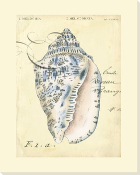 Seashell Ephemera I Wrapped Canvas Giclee Print Wall Art