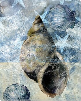 Beachcombing Shell 3 Wrapped Canvas Giclee Print Wall Art