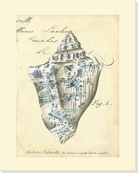 Seashell Ephemera VI Wrapped Canvas Giclee Print Wall Art