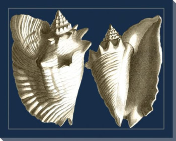 Conch Shells on Navy I Wrapped Canvas Giclee Print Wall Art
