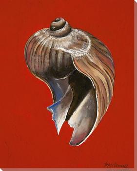 Melaplum Elatum Onion Shell Wrapped Canvas Giclee Print Wall Art