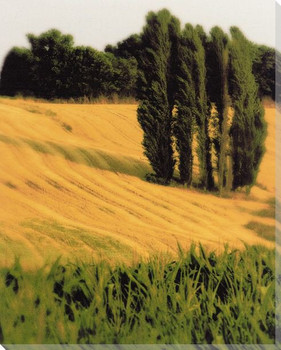 Tuscan Grain Wrapped Canvas Giclee Print Wall Art