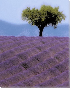 Lavender Hill Wrapped Canvas Giclee Print Wall Art