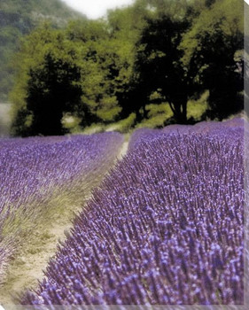 Lavender Path Wrapped Canvas Giclee Print Wall Art
