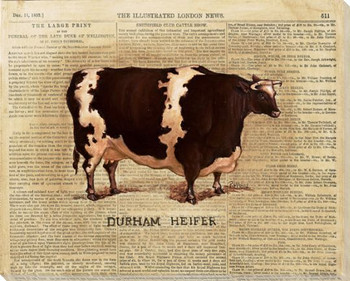 Durham Heifer Cow Wrapped Canvas Giclee Print Wall Art