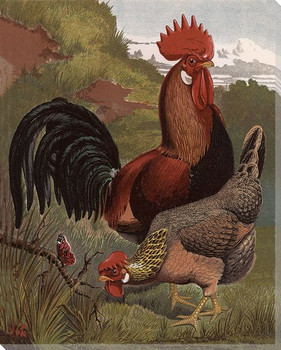 Brown Leghorns Rooster and Hen Wrapped Canvas Giclee Print Wall Art