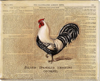 Silver Spangled Hamburg Cockerel Rooster Bird Wrapped Canvas Art Print