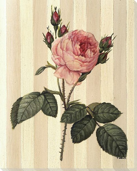 Pink Rose Flower Wrapped Canvas Giclee Print Wall Art