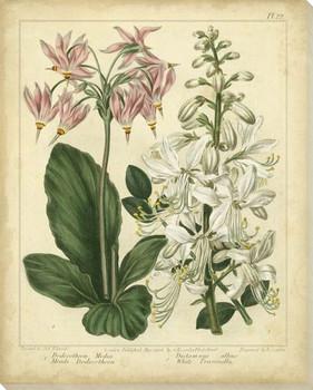 Garden Flora Flowers IV Wrapped Canvas Giclee Print Wall Art