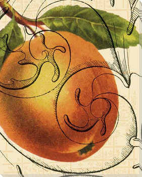 Scrolled Peach Wrapped Canvas Giclee Print Wall Art