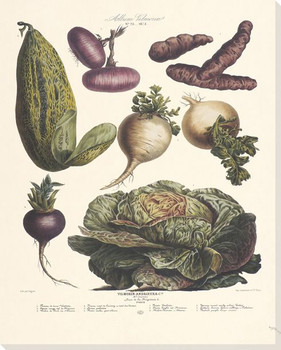 Vegetable Album No.25 Wrapped Canvas Giclee Print Wall Art