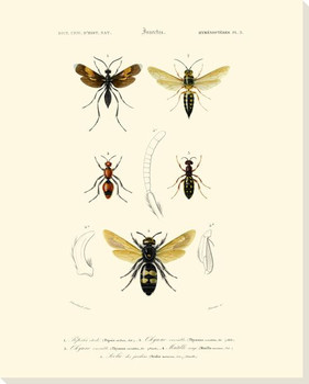 Antique Bees I Wrapped Canvas Giclee Print Wall Art