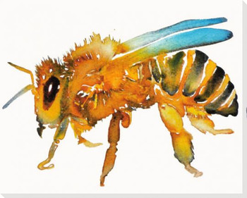 Honey Bee Resting Wrapped Canvas Giclee Print Wall Art
