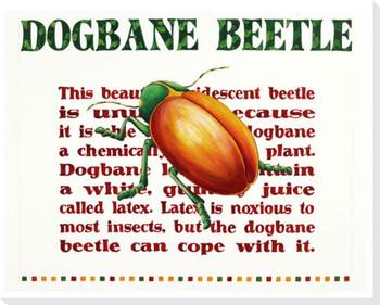 Dogbane Beetle Bug Wrapped Canvas Giclee Print Wall Art