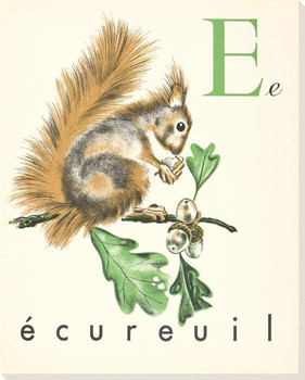 E. Ecureuil Wrapped Canvas Giclee Print Wall Art