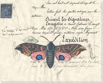 Powder Moth Wrapped Canvas Giclee Print Wall Art