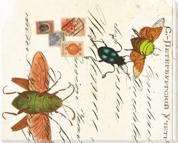 Moth Study III Wrapped Canvas Giclee Print Wall Art