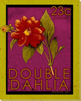 Double Dahlia Stamp Wrapped Canvas Giclee Print Wall Art