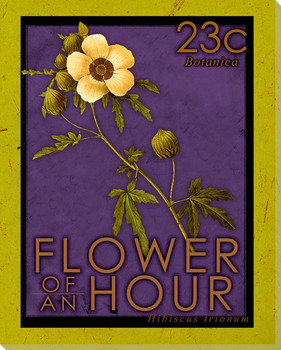 Flower of an Hour Stamp Wrapped Canvas Giclee Print Wall Art