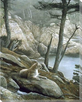 Cougar Wrapped Canvas Giclee Print Wall Art