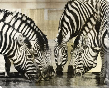 Zebras Wrapped Canvas Giclee Print Wall Art