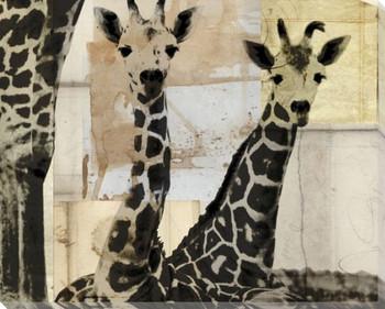 Giraffes Wrapped Canvas Giclee Print Wall Art