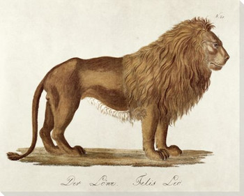 Standing Lion Wrapped Canvas Giclee Print Wall Art