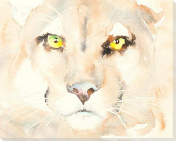 Florida Panther Wrapped Canvas Giclee Art Print Wall Art