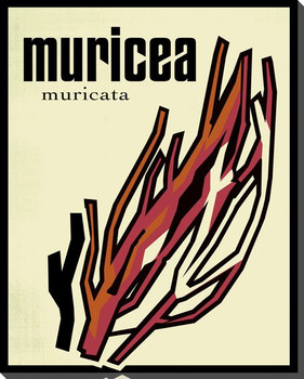 Muricea Wrapped Canvas Giclee Print Wall Art