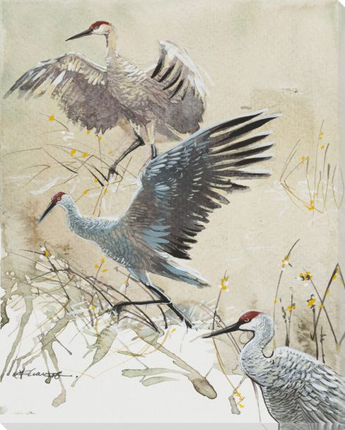 Three Sandhill Crane Birds Wrapped Canvas Giclee Print Wall Art