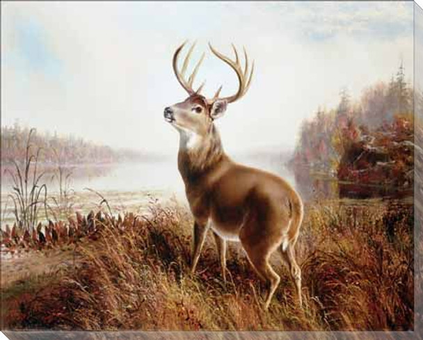 A Stag by a Lake Wrapped Canvas Giclee Print Wall Art