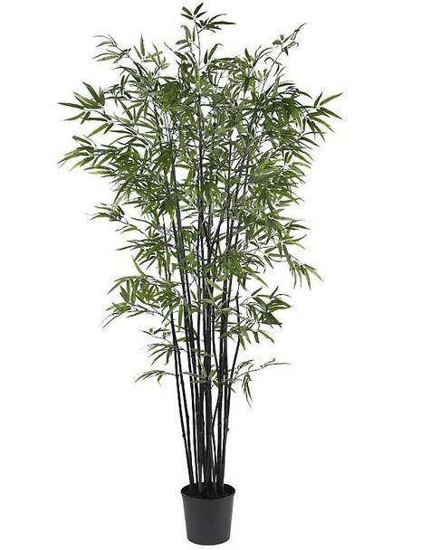 6.5' Black Bamboo Silk Tree