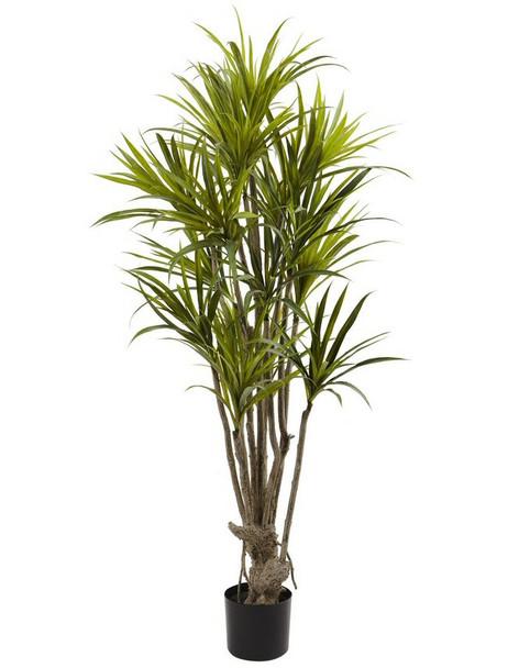 5' Dracaena Silk Tree