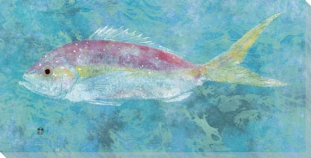 Open Ocean Yellowtail Snapper Fish Wrapped Canvas Giclee Print
